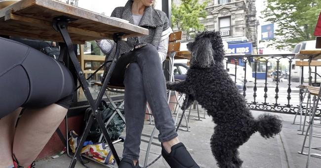 Al fresco with Fido: NY law allows dogs on restaurant patios