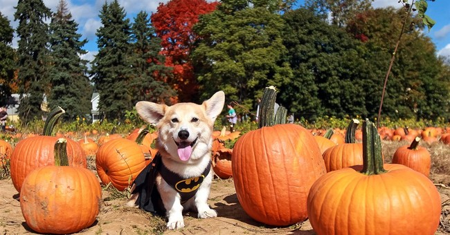 Dogs with busy social lives dress up for more than Halloween