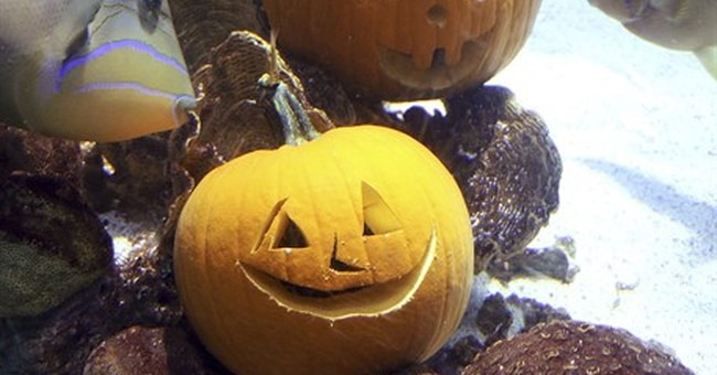 Aquarium marks Halloween with underwater jack-o'-lanterns