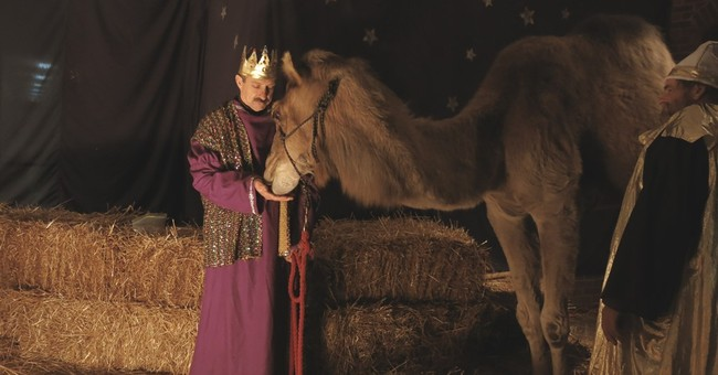 Christmas bonus: Farm animals in demand for Nativity scenes