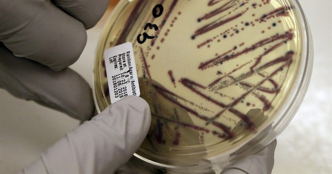 Things to know about the investigation of E. coli outbreak