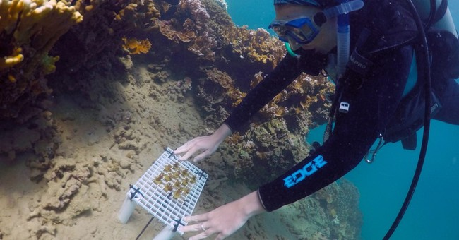 Scientists tinker with evolution to save Hawaii coral reefs