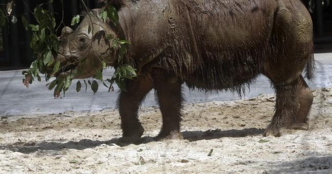 US-born Sumatran rhino formally handed over to Indonesia