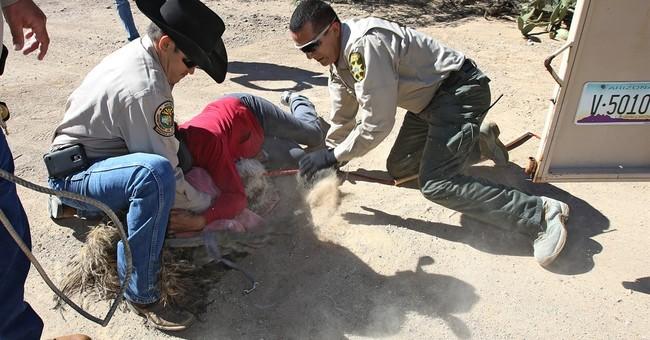 Arizona authorities capture 4 emus on the lam in Tucson