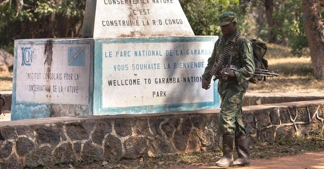 Armed groups target elephants in Congo park