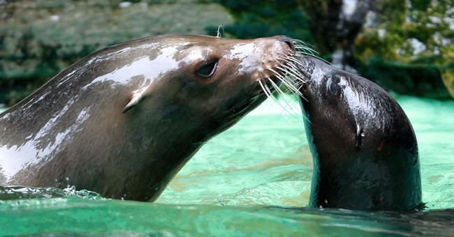 German police investigating slaying of sea lion at zoo