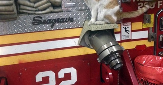 Help wanted: Book looks at 50 'Cats on the Job'