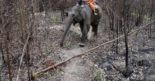 Indonesia uses trained elephants to control forest fires