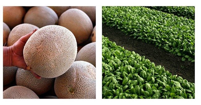 New produce safety rules aim to prevent illness outbreaks