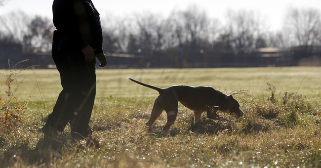 Pit bull police dog defies breed's savage stereotypes