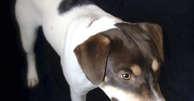 After dog's death, an effort to ban guns to put pets down