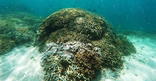 Hawaii to come up with management plan to help coral reefs