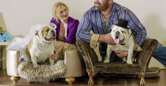 Bulldogs in love: New movie tells dog wedding story