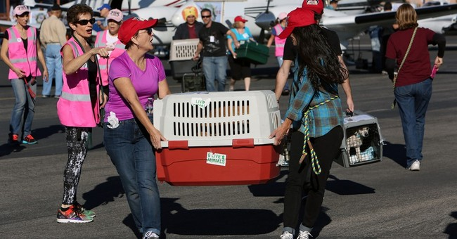 800 dogs, cats flown places with better odds of adoption