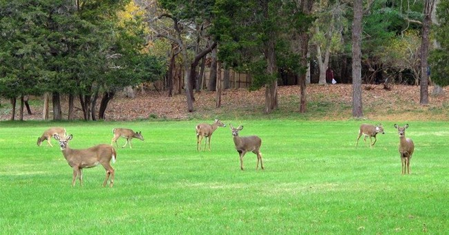 Deer sterilization effort stirs ire in NY's tony Hamptons