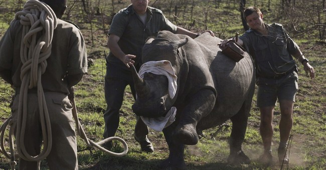 South Africa moves closer to legal trade in rhino horns