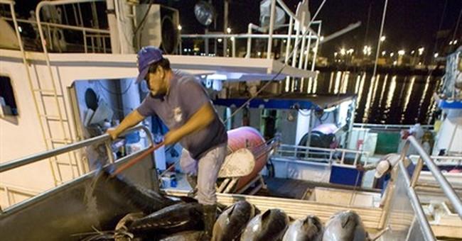 Hawaii-based longline fishermen allowed to keep catching ahi
