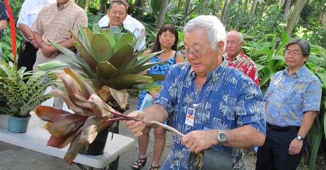 Hawaii officials ask public to help stop dengue fever spread