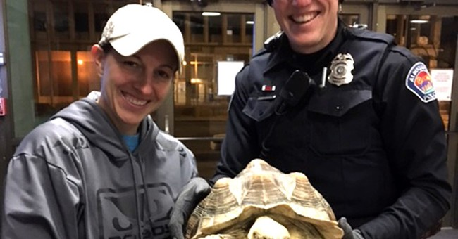 Stolen tortoise returned home safely in Albuquerque