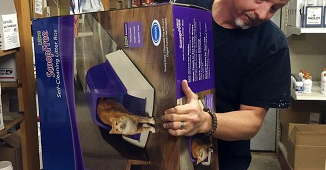 Self-cleaning litter box fuels online pet supply sales