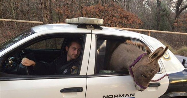Donkey picked up by police is reunited with Oklahoma owner