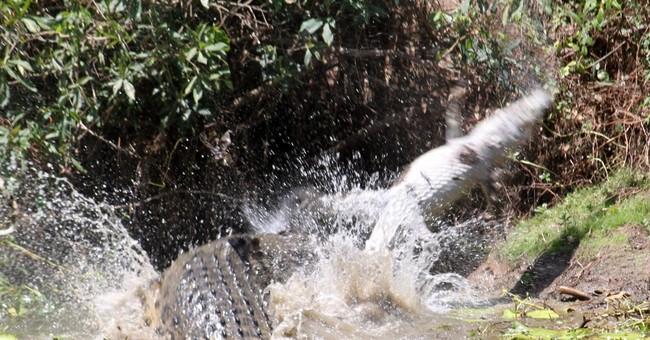 Tourist photographs Australian scene of croc versus croc