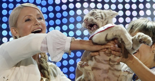 Cold in blacked-out Crimea kills rare Bengal tiger cub