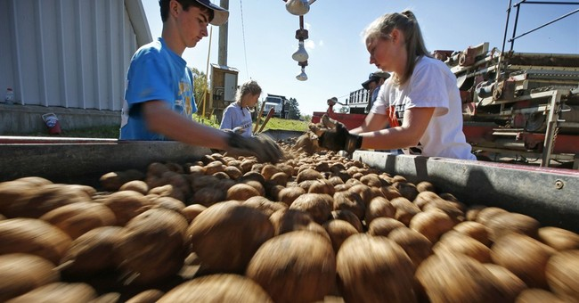 Panel reverses, says white potatoes OK for WIC recipients