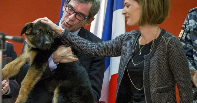 Russia gives France puppy to replace killed police dog