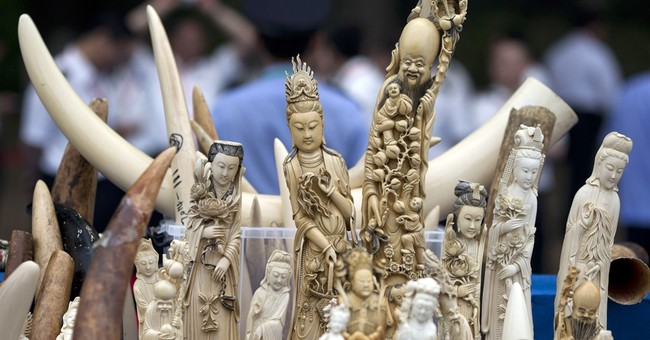 Report shows Japan loopholes aid illicit trade in ivory