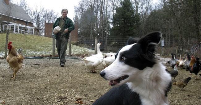 Vermont farmers create 'unicorn of self-published books'