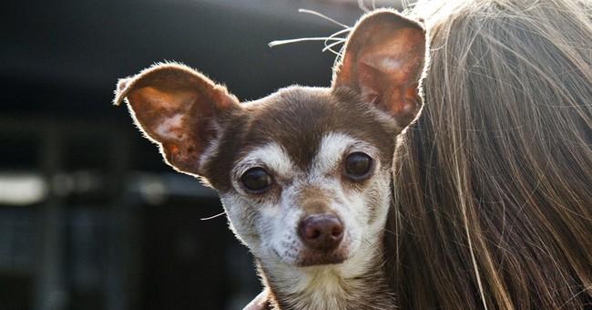 Shelter Animals Count: 1st database of US shelter animals