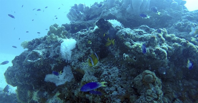 Diving in the Marshall Islands with tuna, turtles and wrecks