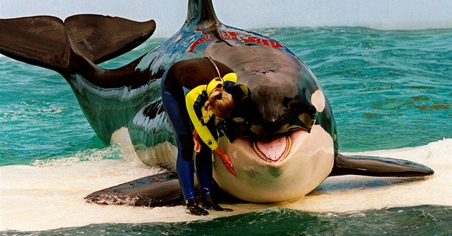 Orca 'Lolita' at Miami facility to get endangered protection
