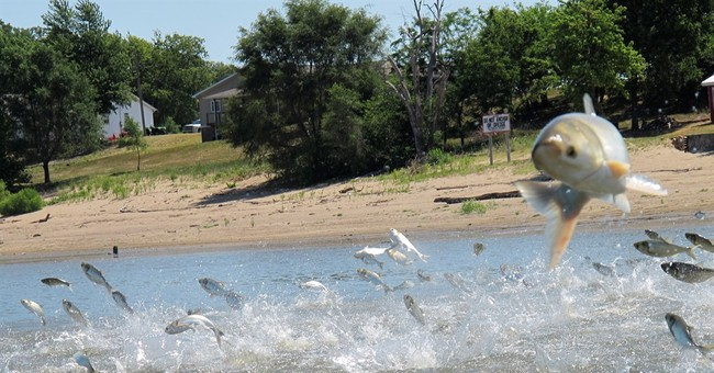 Effort to keep Asian carp from Great Lakes appears stymied