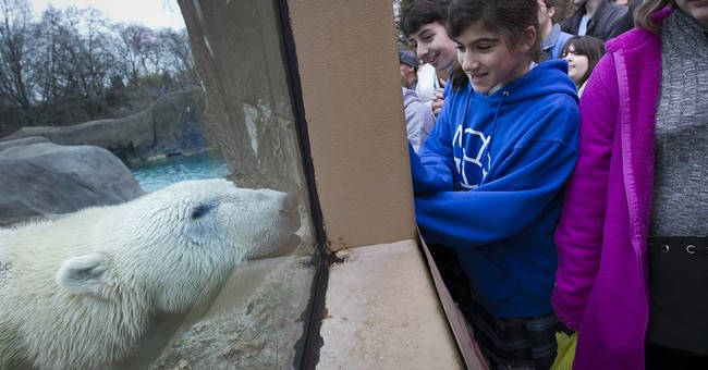 Birthday gifts for the oldest US polar bear? Ice, pumpkins