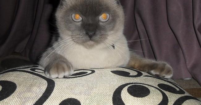 No dog-eat-dog politics: Siberian city backs cat for mayor