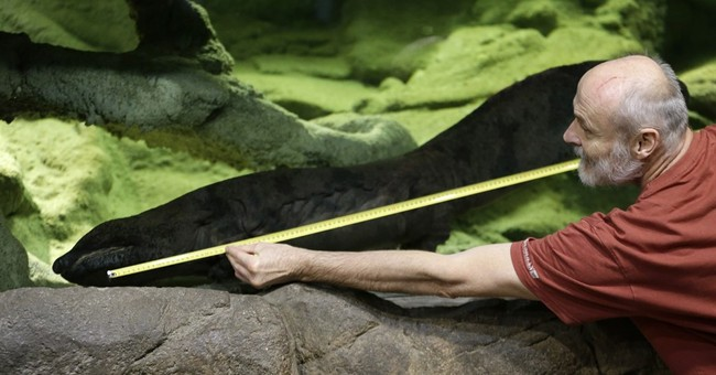 Prague zoo claims to have the longest salamander on Earth