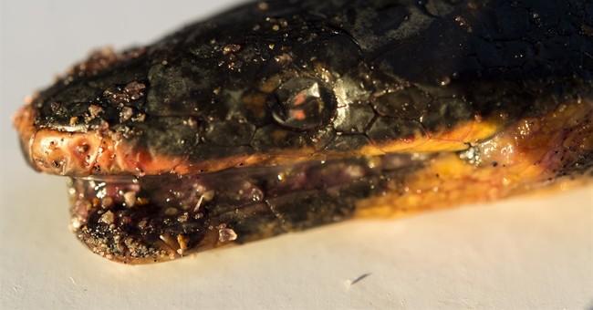 Venomous sea snake washes onto Southern California shore