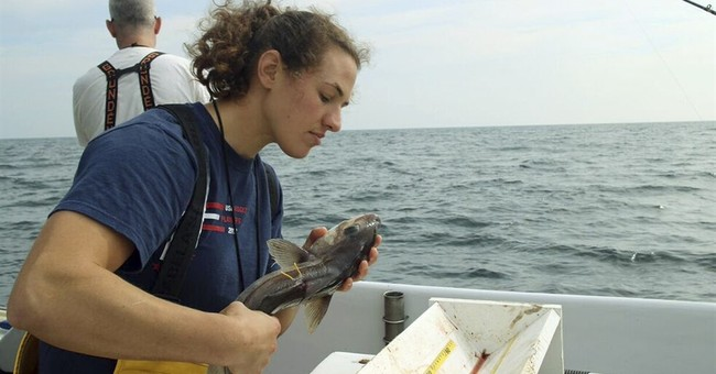 Fish food for thought: New research affects catch limits