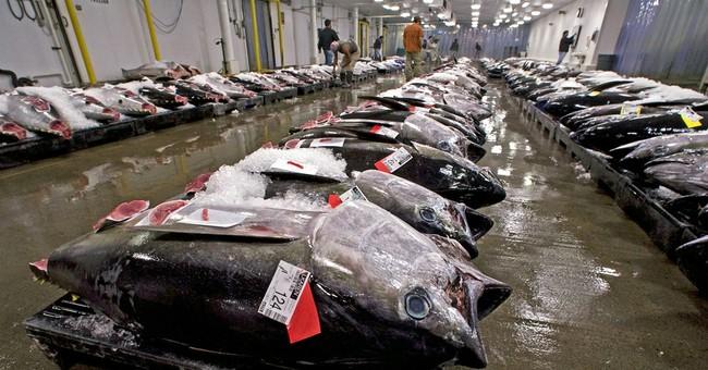 Judge upholds rule allowing more Hawaii bigeye tuna fishing
