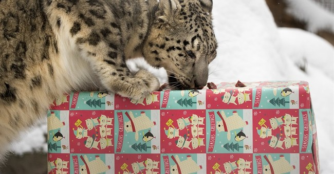 Nebraska zookeepers give treat-filled presents to animals