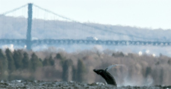 Humpback whale spotted miles inside Narragansett Bay