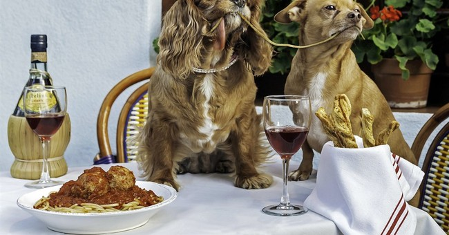 Online animals of the year: Cute faces and a rat's resolve