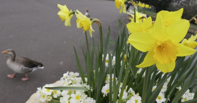 Daffod-ill: UK stores warned people may mix up flowers, food