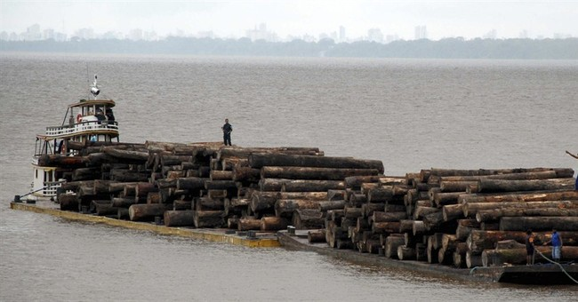 Save the trees: New campaign against deforestation launched