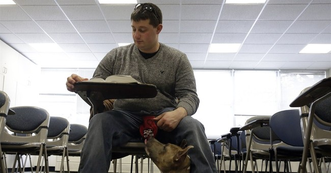Rescued pit bulls fight stigma by guiding people in need