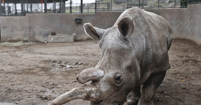 Survival for some endangered species hinges on 'Frozen Zoo'