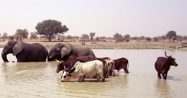 At least 19 Malian elephants killed by poachers