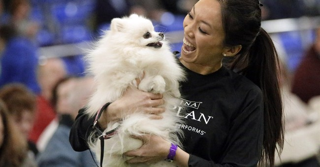Border collie named Tex wins Westminster dog agility contest